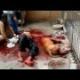 Ataque de perro pitbull miren como este perro facil mente acesina este pobre hombre wao