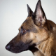 El Mejor Amigo Del Hombre /Un perro pastor salva a su dueña en un intento de suicidio
