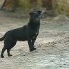 Muere el perro argentino que llevaba nueve años sin alejarse de la tumba de su dueño