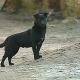 increible miren lo que haces Un perro salva la vida de una niña de 3,5 años de edad