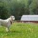 VIDEO Un perro hereda un millón de dólares Maldita loquera