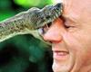 La mentamo el caso de este pobre hombre una serpiente lo muerde en la misma cara ver mas..
