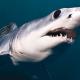 Un buzo retrata cara a cara al tiburón más aterrador del océano Que monstruo Dios!
