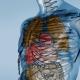 Científicos japoneses consiguen hacer transparentes partes del cuerpo