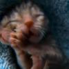 Video: increible Gata con dos cabezas podría vivir más de 10 años