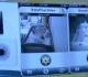 VIDEO Una nueva app para poder monitorear al bebé a través de wifi en el iPhone o iPad.