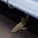 EL DIABLO Como pasaria esto ¡Un tiburón en el metro de Nueva York!