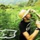 VIDEO QUE locos metidos en una finca llena de mariguana