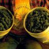 Legalizar la marihuana en Uruguay,