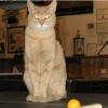 El gato Stubbs, alcalde de un pueblo de Alaska, es atacado por un perro