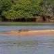 Video quien ganara miren esto Animal Clip Of The Week: Brave Jaguar Goes In For The Kill On A Crocodile