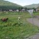 'Encerrado' entre pinos: Hallan en Siberia a un chico que no ha salido nunca del bosque