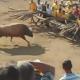 VIDEO Nunca JUEGUEN con un toro Jamas miren Esto
