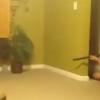 Miren lo que hace este con una escopeta disparando dentro de su casa : He Wasn't About That Life!