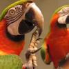 Miren esta cotorra tan pasa hablando mielda: Macaw Shushes The Other Bird