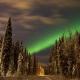 Deshielo de un glacial devuelve a la luz un bosque ancestral en Alaska