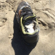 EN cuentran un teni con el pie mocho dentro en una playa Shoe Found with Severed Foot Inside