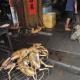 VIDEO SOPRENDENTE SOBRE LA COMIDA CHINA MIREN ESTO AVER QUE DICEN