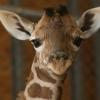 MIREN ESTO ES UN TRUCO DE FACEBOOK :Por qué Facebook está lleno de jirafas