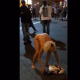 VIDEO Una pobre chica drogada desnuda en la calles de NY :Popped A Molly She's Nekkid: Lady Acting Up In The Streets (*Warning* Must Be 18yrs Or Older To View)