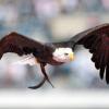 MIREN ESTO Capturan en el Líbano supuesta 'águila espía' de Israel