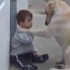 Video miren este perro lo dejaron cuidando un bebe miren loque paso :Man's Best Friend Babysitting