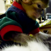 Miren Este Adorable monito con este gato parece su padre Adorable Monkey Grooms Cat