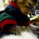 Miren Este Adorable monito con este gato parece su padre Adorable Monkey Grooms Cat