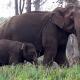 Una niña india habló con unos elefantes y salvó la ciudad que habían invadido
