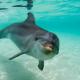 Los delfines meten la nariz en la 'droga': ¿Adictos a una toxina de los peces globo?