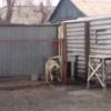 VIDEO MIREN ESTE PERRO LO QUE HACES