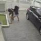 CUAL GANARA DE ESTA PELEA ? Girl Fights Back After Thief Tries To Steal Her Purse