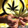 MIREN ESTO Perú: llaman a debatir la legalización de la marihuana