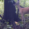 Video miren este animal entren ala pagina If A Deer Farts In The Woods