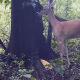 Video miren este animal entren ala pagina If A Deer Farts In The Woods