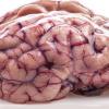 Video miren esto para que entiendan algo bueno Myths About The Brain You Probably Believe