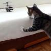 VIDEO Miren esto gatos que gracioso son compartanlo A compilation of scaredy cats.