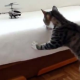 VIDEO Miren esto gatos que gracioso son compartanlo A compilation of scaredy cats.