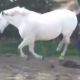 Video Que maldita pata en la cara solo miren esto When Horsing Around Goes Wrong