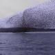 Video miren esto increible dios Amazing Natural Phenomena - Murmuration