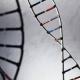 Entera de esto ¿Hacer pruebas genéticas en humanos es jugar a ser Dios?