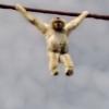 Video miren este monito lo que haces en camara Monkey Poops On Zoo Visitors