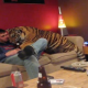 VIDEO increible Vive con un tigre en su casa Pet Tiger Just Wants Some Food (Would You Want A Tiger Roaming Your Crib All Day?)