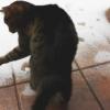 Video Gracioso miren que gato imprecionante Cat's First Snow Experience