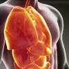 Mira esto increible Órganos humanos, el próximo paso en la impresión 3D