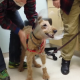 Emocionante video del momento en que un perro que era ciego ve a su familia tras cirugía Formerly blind dog Duffy seeing the family after surgery