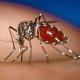 Chikungunya virus sin cura chikungunya que se propaga por América miren como evitar esta tremenda enfermedad