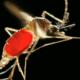Sino quiere morilte mira la 8 claves para entender qué es y cómo se trata el virus chikungunya