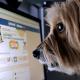 Que es esto Por qué creemos los bulos que circulan en Facebook?