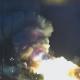 Video Explota el cohete portador estadounidense Antares poco después del despegue